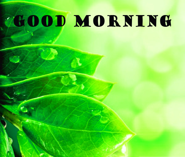 Good Morning Nature Pictures Images Download HD