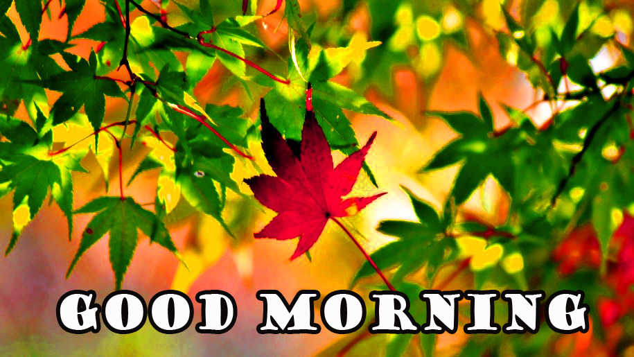 Good Morning Nature Photo Pictures Images Download In HD