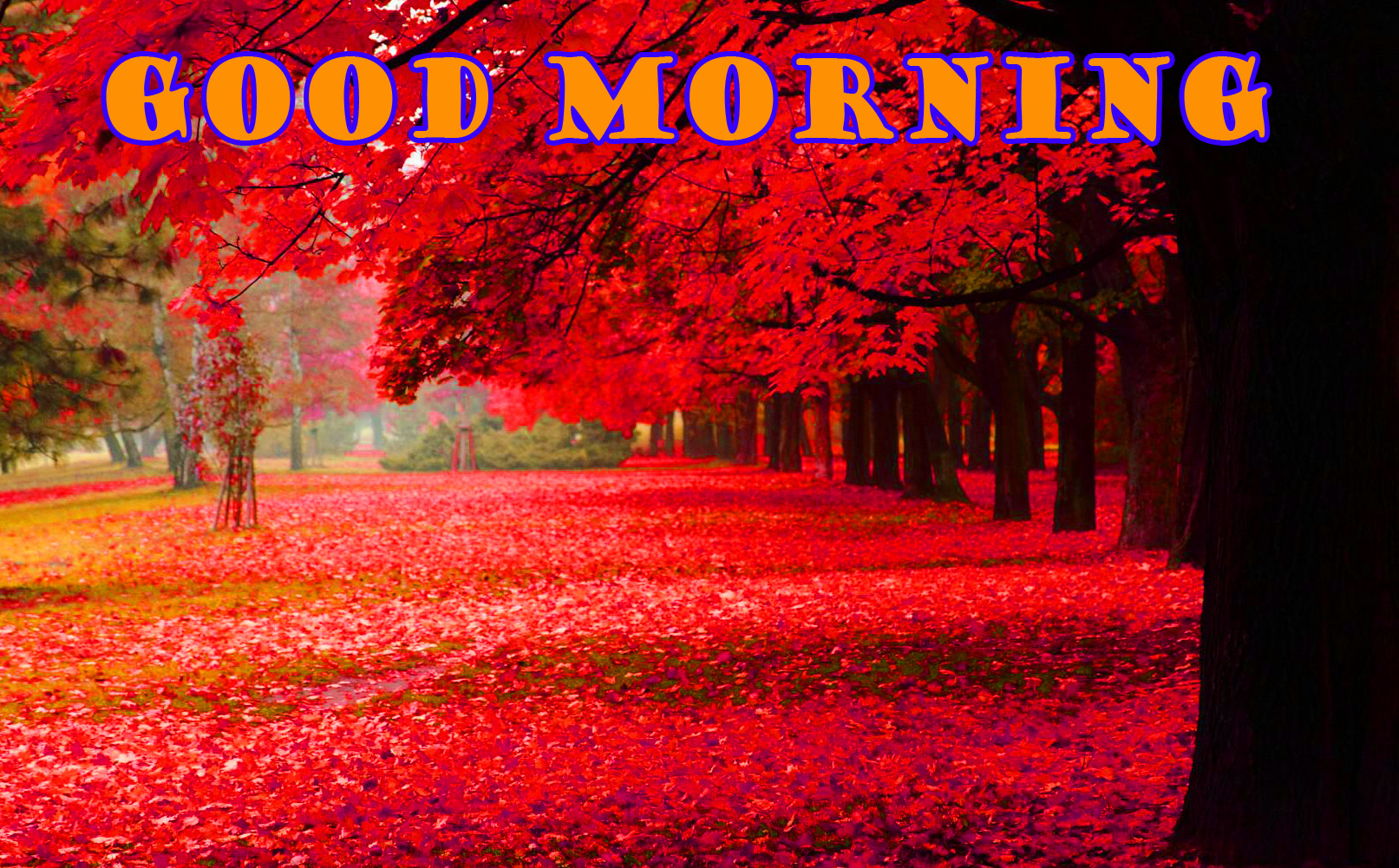Good Morning Nature Wallpaper Pictures Images Free Download