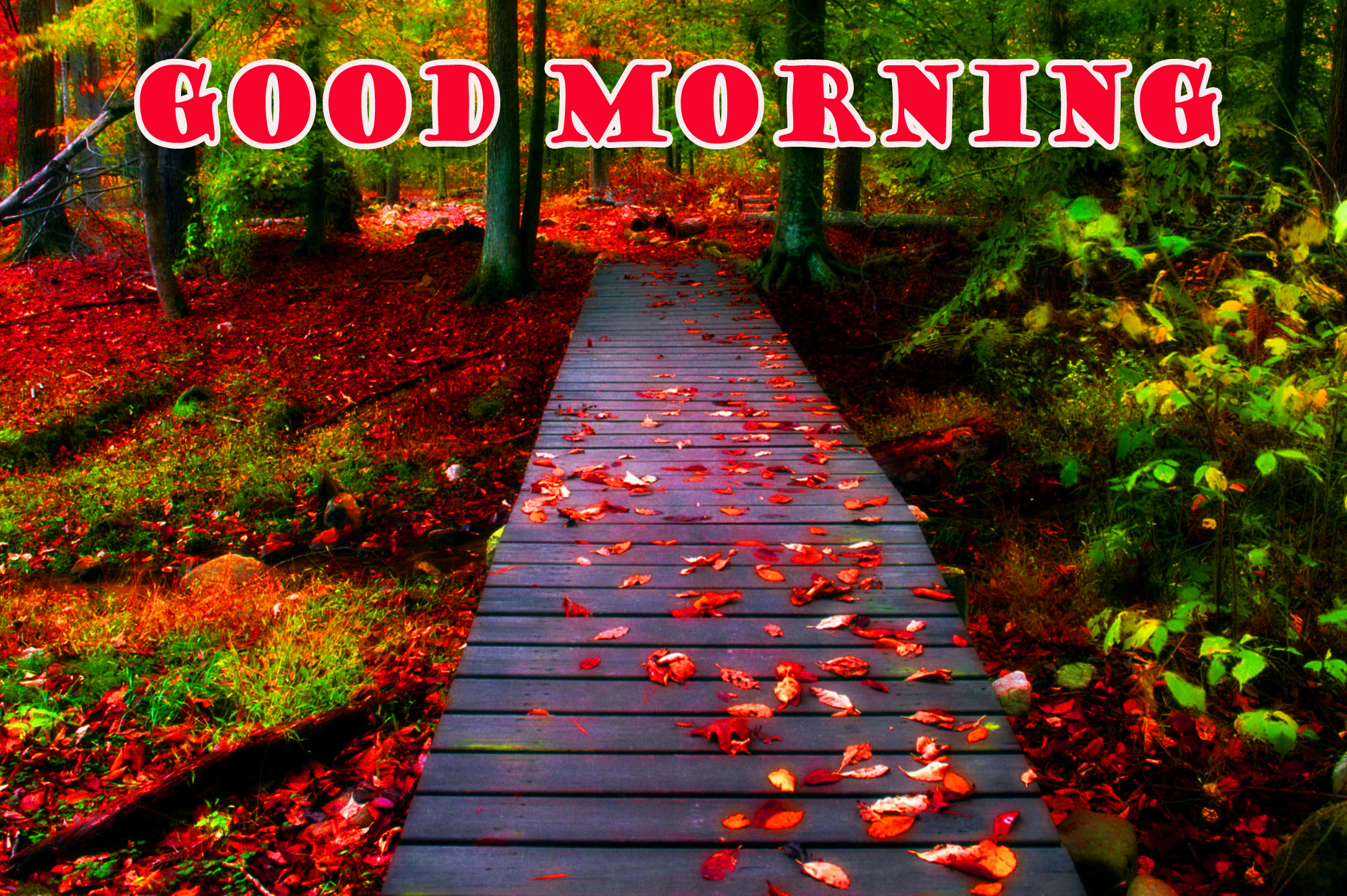 Good Morning Nature Photo Pictures Free Download