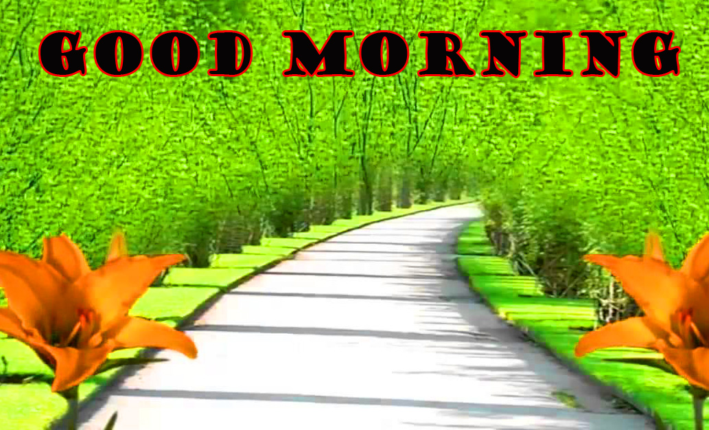 Good Morning Nature Wallpaper Pictures Images Download
