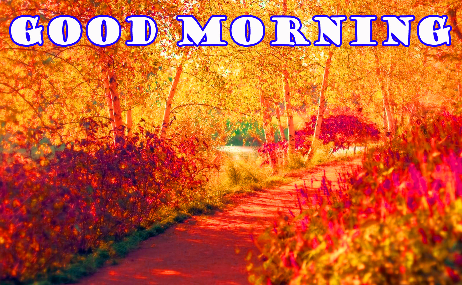 Good Morning Nature Wallpaper Pictures Free Download