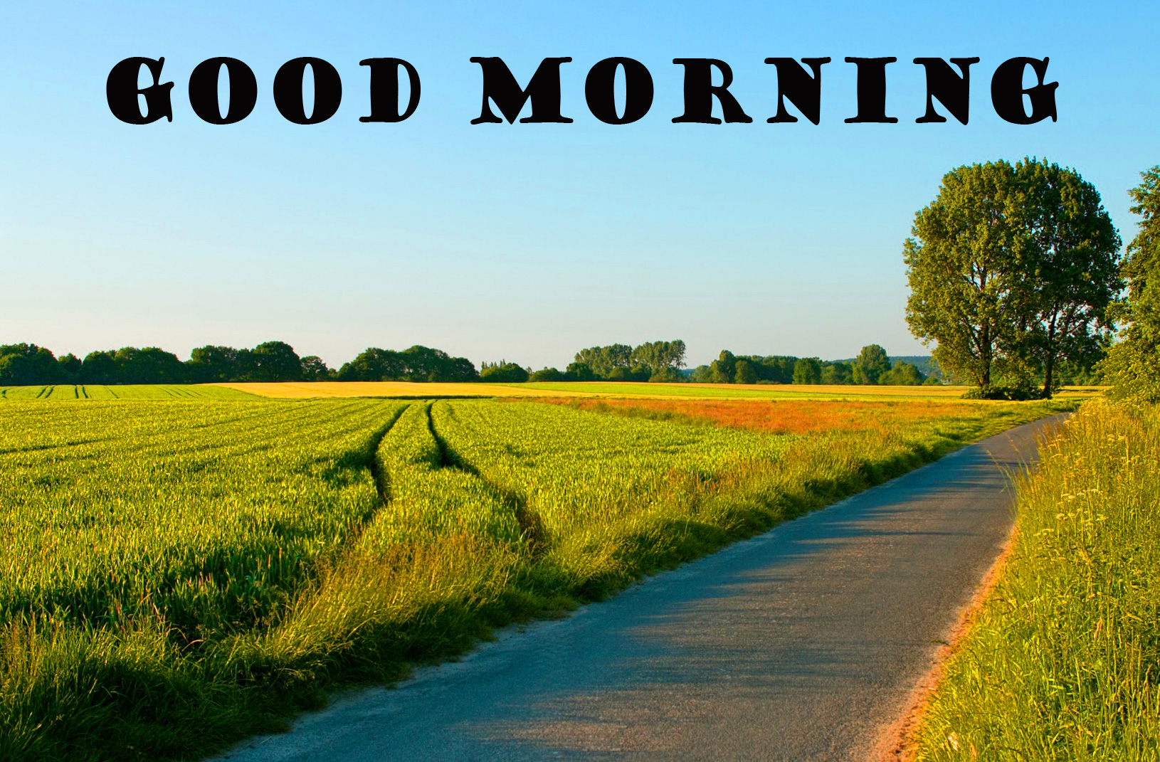 Good Morning Nature Images Pictures Photo Download