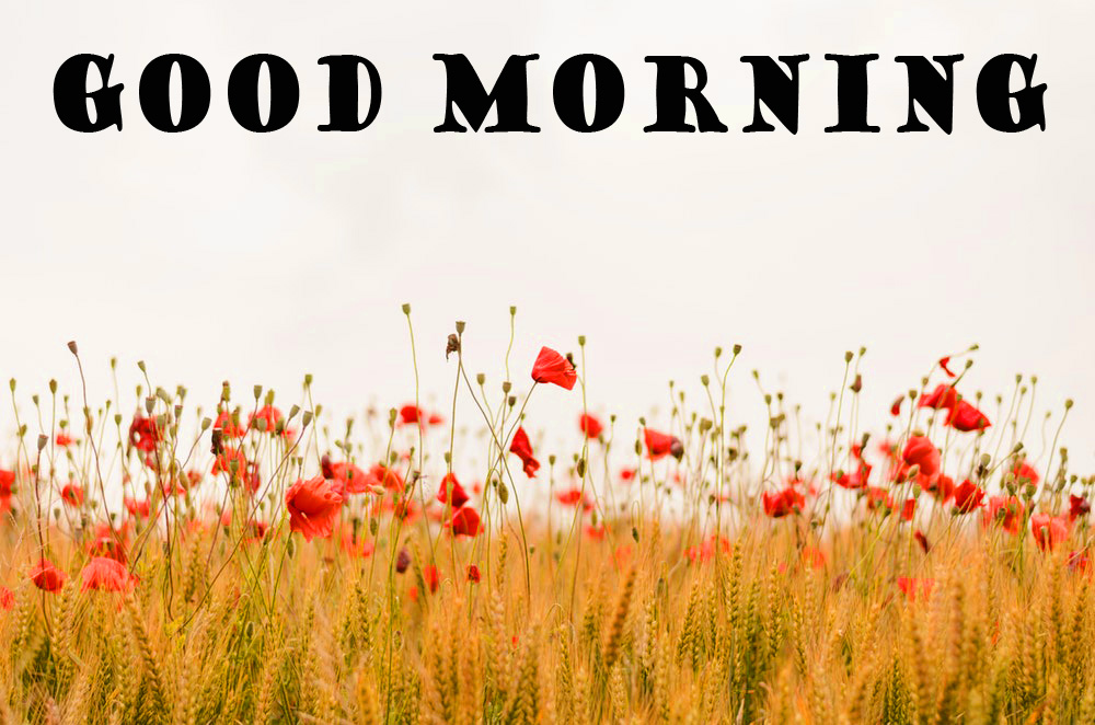 Good Morning Nature Photo Wallpaper Pictures Free Download
