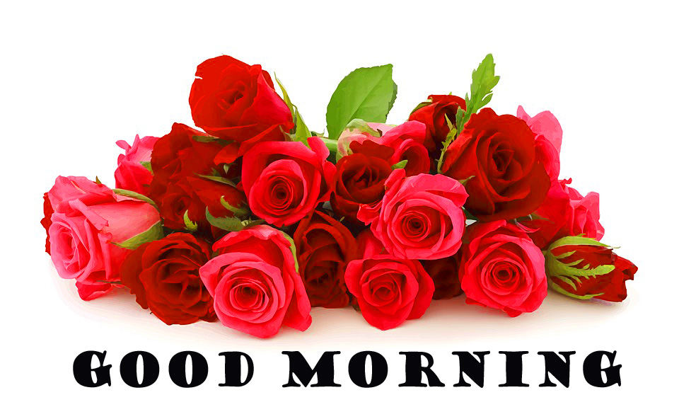 Good Morning Red Rose Images Pictures Photo HD Download