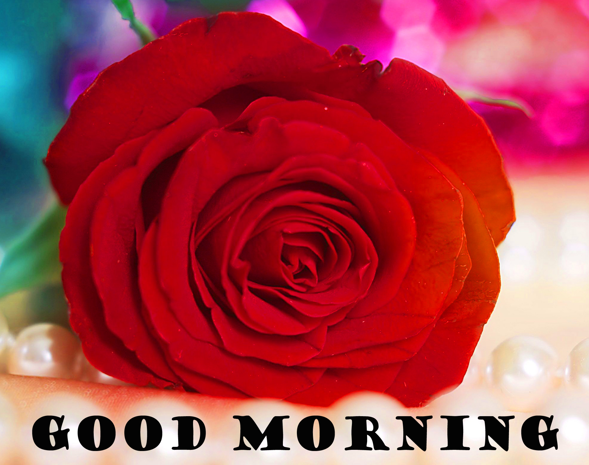 Good Morning Red Rose Pictures Images Photo Download