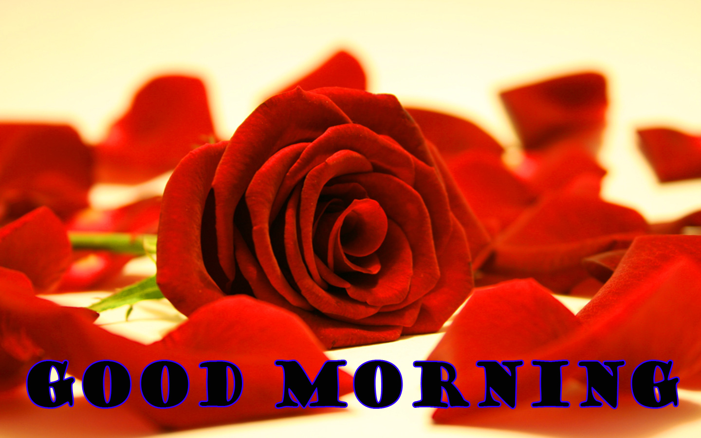 Good Morning Red Rose Photo Wallpaper Pictures HD Download