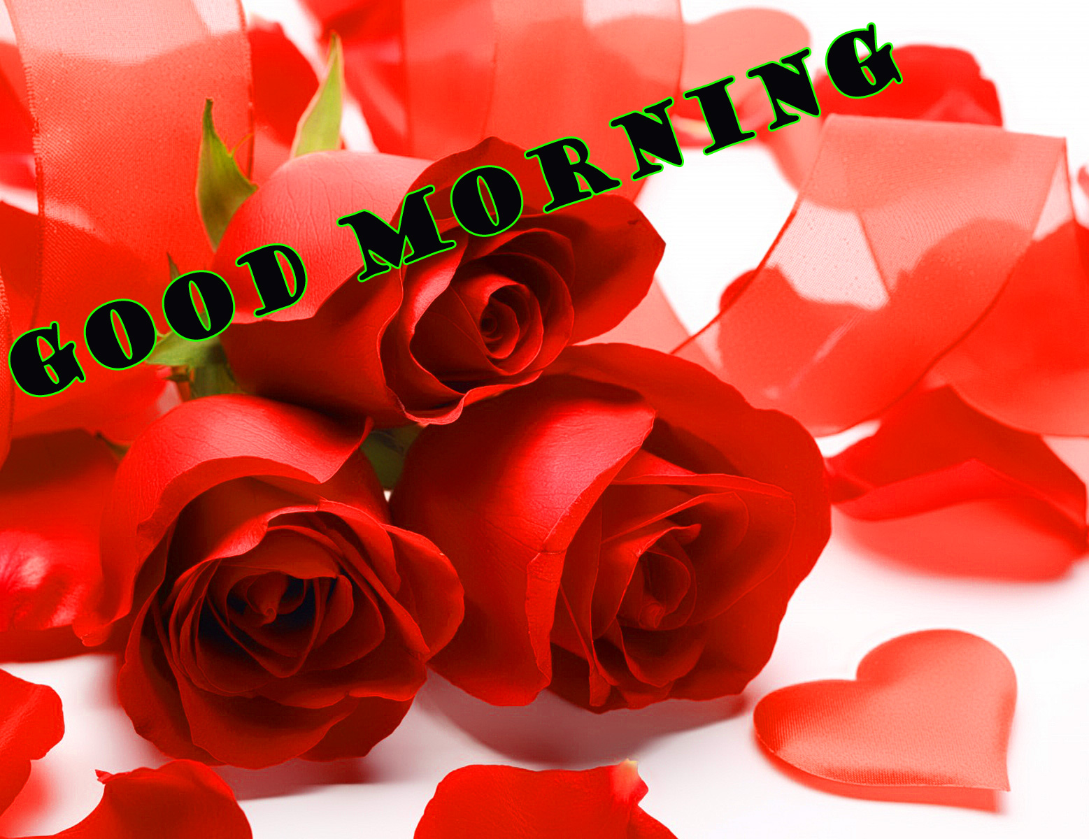 Good Morning Red Rose Photo Wallpaper Pictures Download
