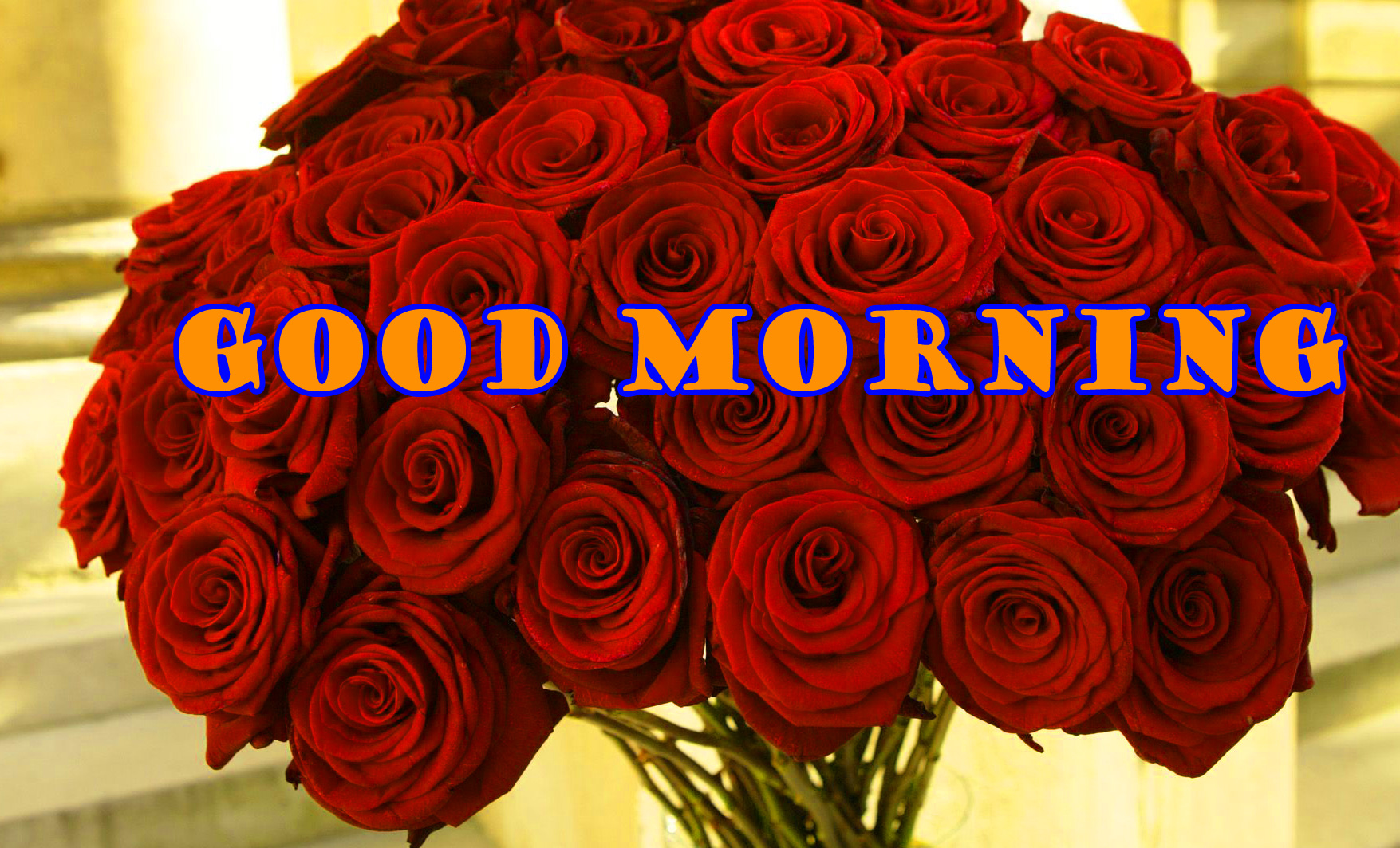 Good Morning Red Rose Wallpaper Photo HD Download