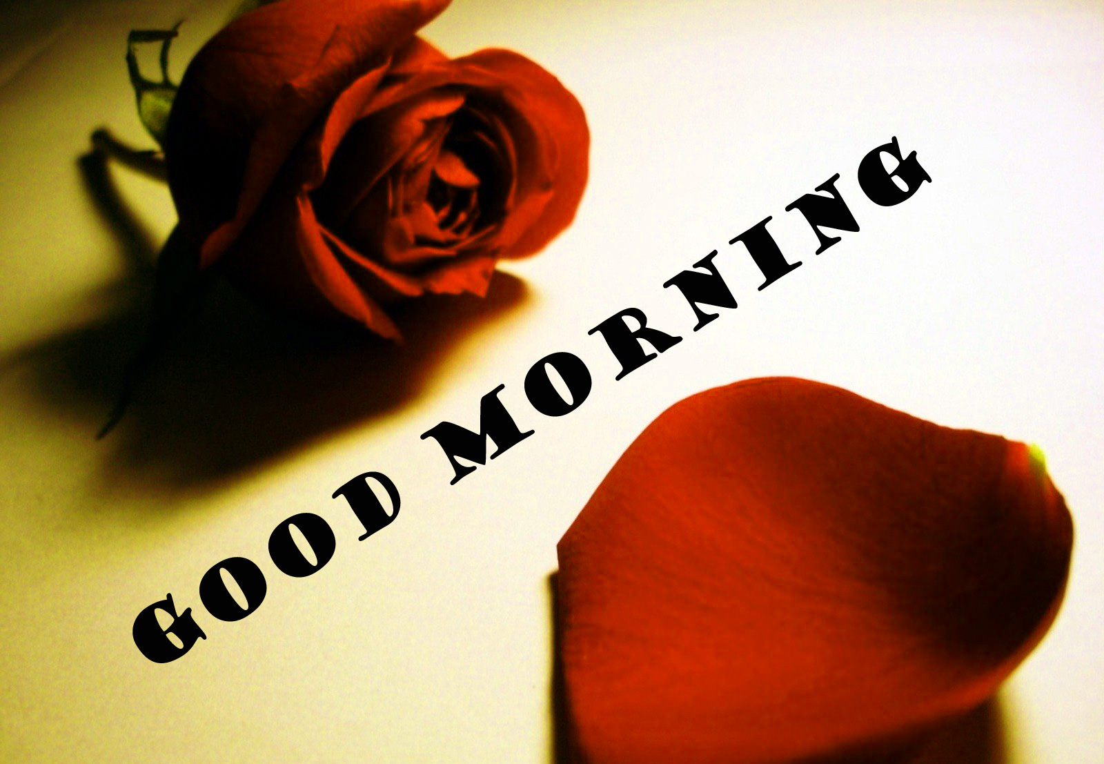 Good Morning Red Rose Wallpaper Photo Images HD Download