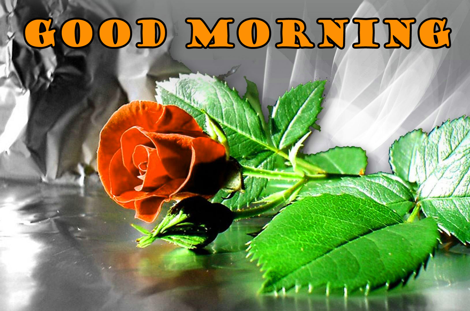 Good Morning Red Rose Pictures Images Photo HD