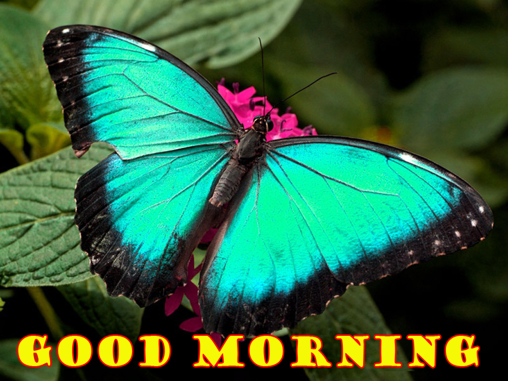 Special Wonderful Good Morning Wallpaper Pictures Images Free Download