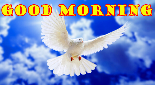 Special Wonderful Good Morning Photo Images Pictures Free HD