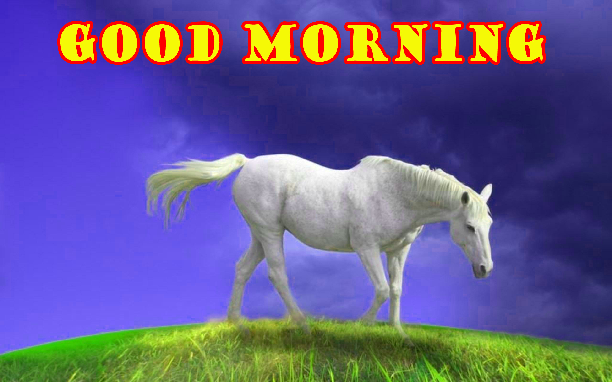 Special Wonderful Good Morning Pictures Images Free HD