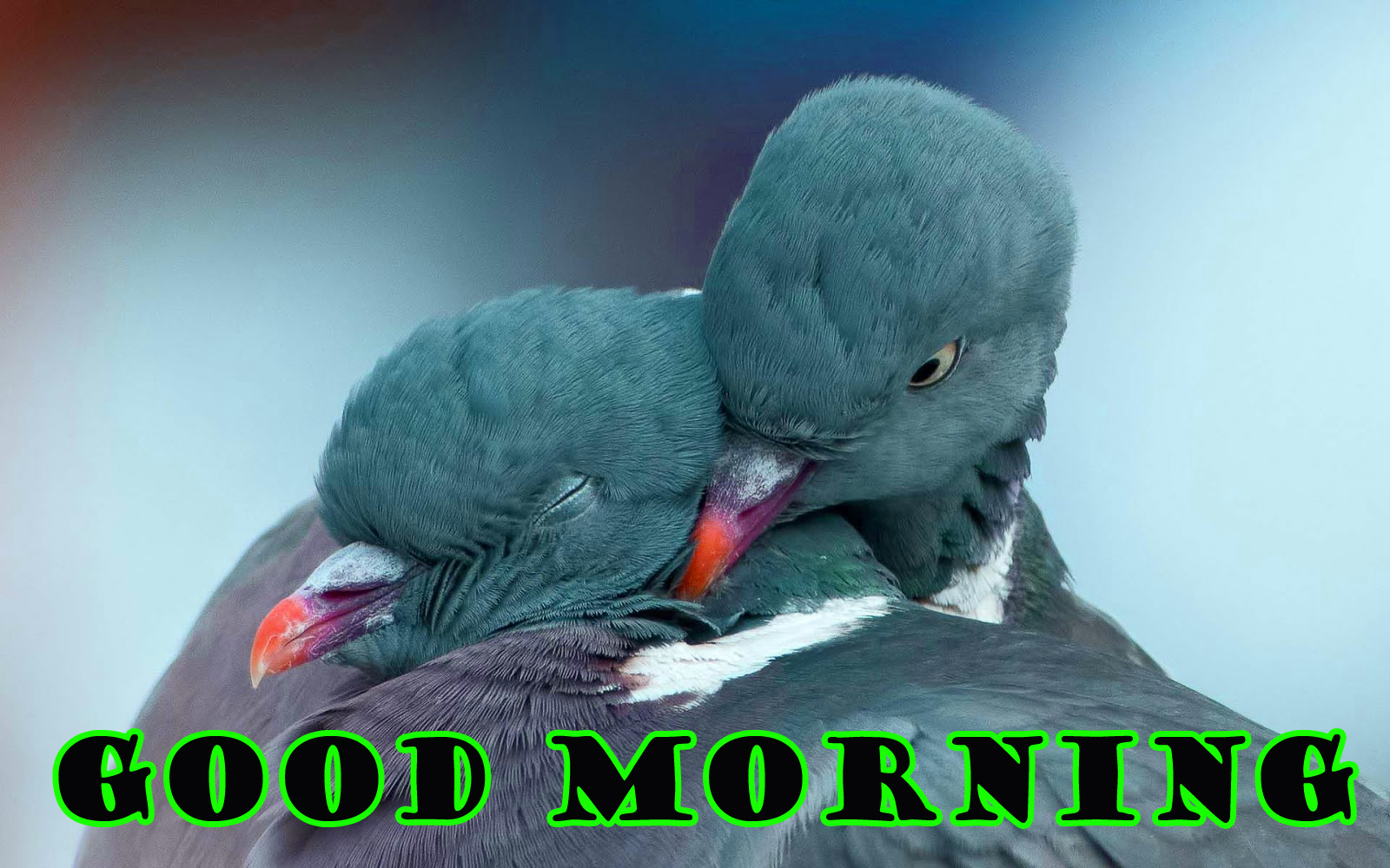 Special Wonderful Good Morning Photo Wallpaper Pictures Free Download