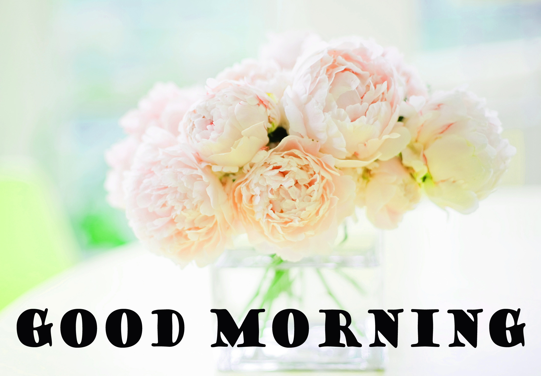 Special Wonderful Good Morning Photo Images Free HD Download