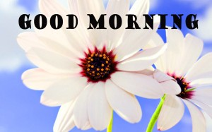 sweet good morning images Photo Pics Free Download