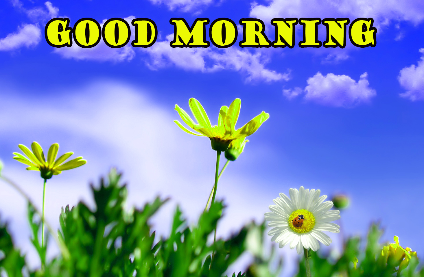 668+ sweet good morning images Pics HD Download