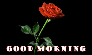 sweet good morning images Wallpaper Pics With Red Rose