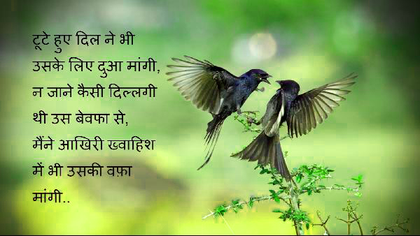 उर्दू शायरी Best Hindi Shayari Images Wallpaper Photo For Facebook