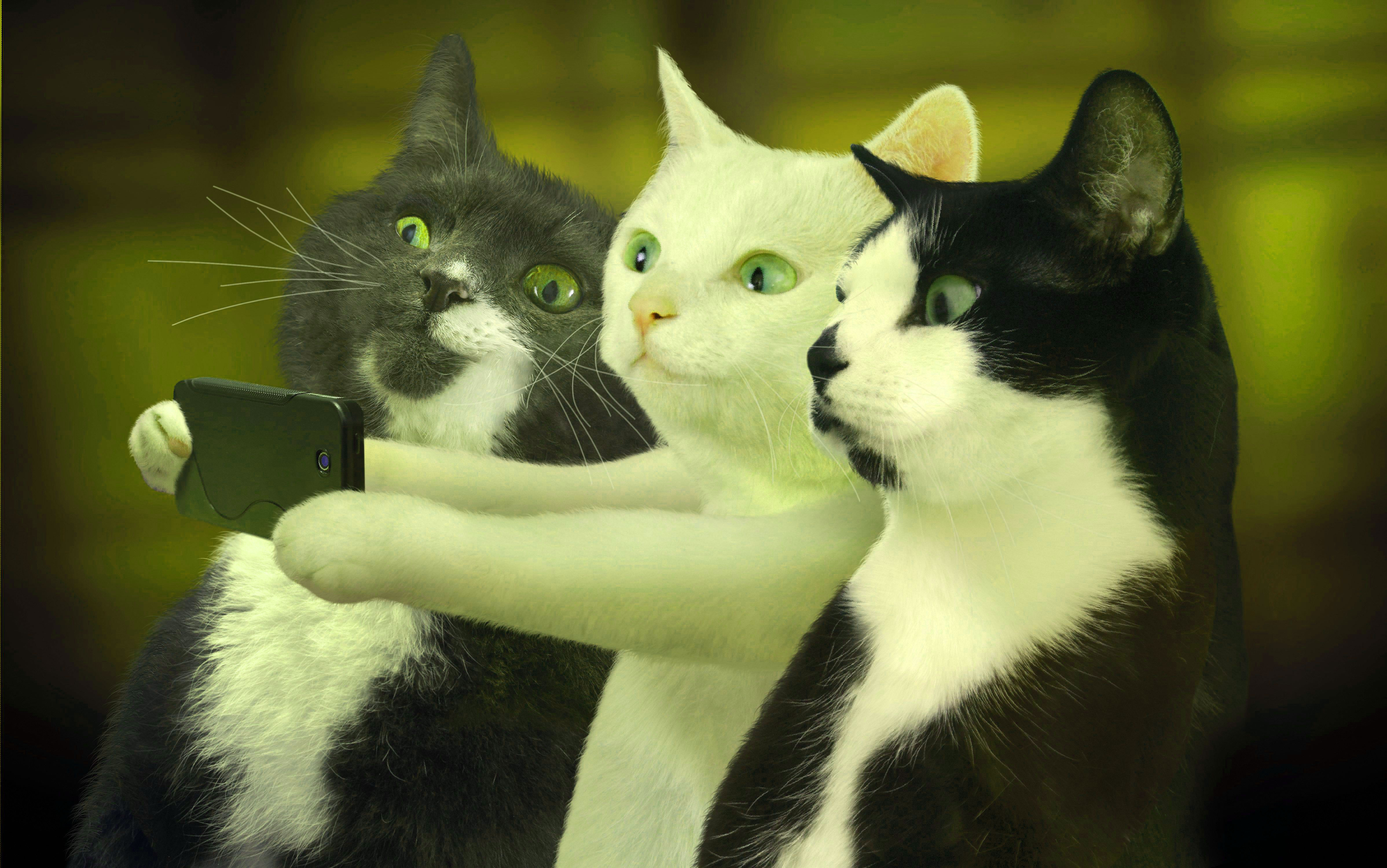 Best funny selfie images Wallpaper Photo Pics Pictures HD