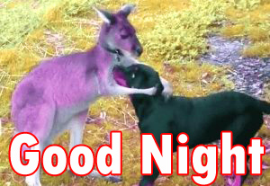 Funny Good night Images Wallpaper photo Pics Pictures Download