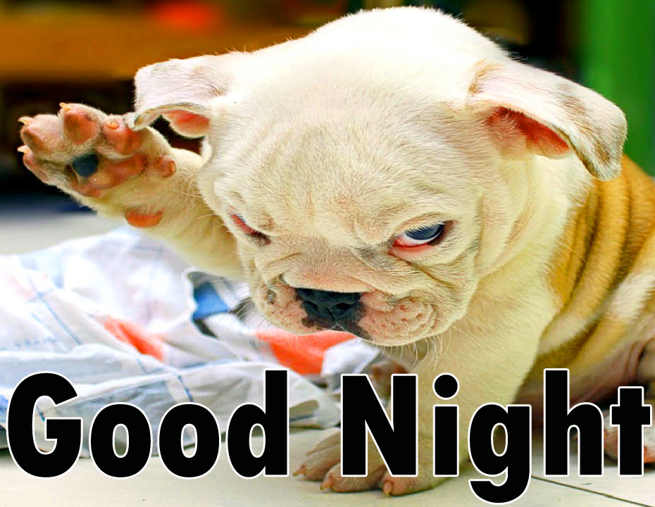 Funny Good night Images Wallpaper photo Pics Pictures Free HD
