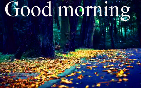 Special Good Morning Wishes Pictures Images Photo Free Download