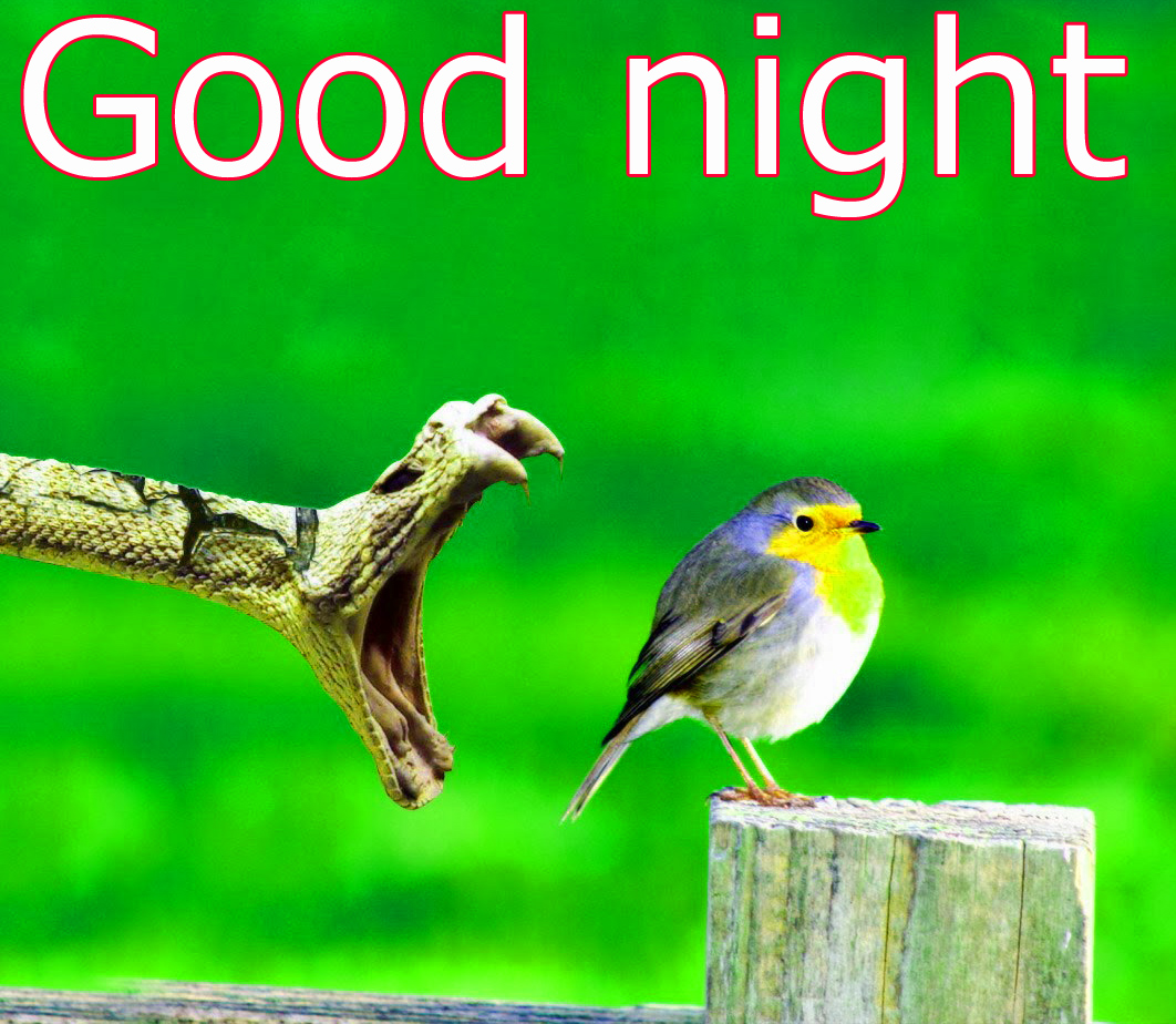 Funny Good night Images Wallpaper photo Pics Pictures Free HD Download