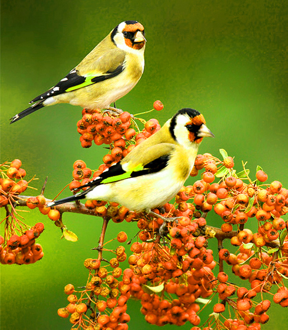 Beautiful Images For Whatsapp DP With Flower Nature Love Animal Images Photo Wallpaper Pictures Pics Download