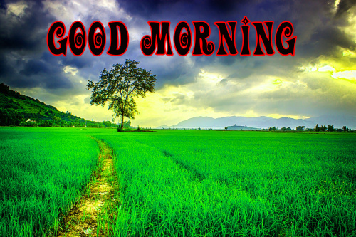 Good Morning Nature Wallpaper Pics Photo Download