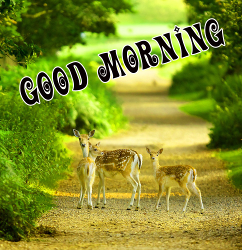 Good Morning Nature Wallpaper Pics Photo Download for Whatsapp