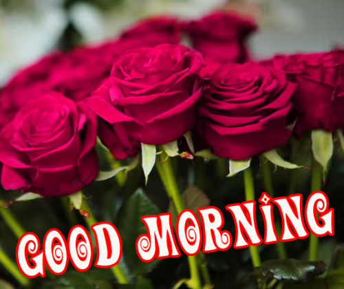 Good morning red rose images Wallpaper Pics Download