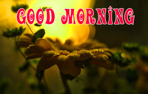 special Wonderful good morning images Wallpaper Pics Download
