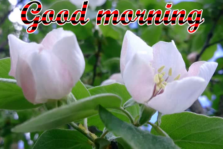 BEAUTIFUL 3D GOOD MORNING IMAGES WALLPAPER PICTURES WITH FLOWER