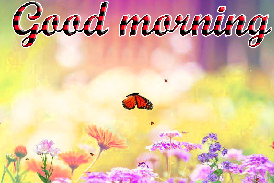 BEAUTIFUL 3D GOOD MORNING IMAGES WALLPAPER PICS FOR WHATSAPP