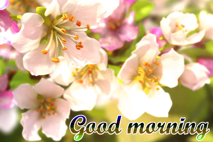 BEAUTIFUL 3D GOOD MORNING IMAGES PHOTO PICS DOWNLOAD FOR WHATSAPP