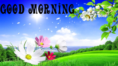 Good Morning Best Beautiful Wallpaper Pictures Free for Whatsapp