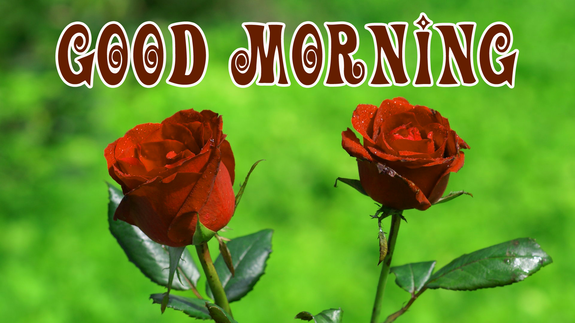 Good Morning Best Beautiful Photo Images for Whatsapp