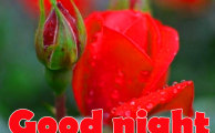 445+ Red Rose Good Night Images Photo Pics for Lover & Girlfriend