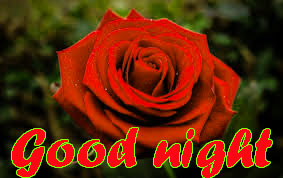 RED ROSE GOOD NIGHT IMAGES WALLPAPER PICS FOR WHATSAPP