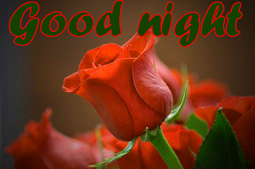 RED ROSE GOOD NIGHT IMAGES WALLPAPER PICS FOR WIFE