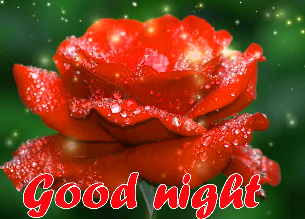 RED ROSE GOOD NIGHT IMAGES WALLPAPER PICTURES