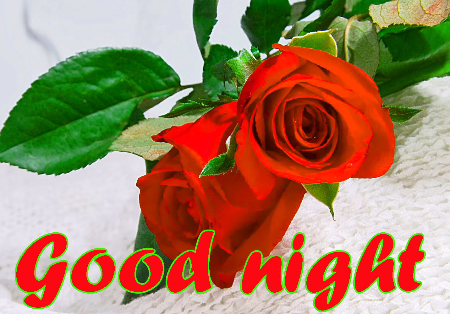 RED ROSE GOOD NIGHT WISHES IMAGES WALLPAPER PICS FREE