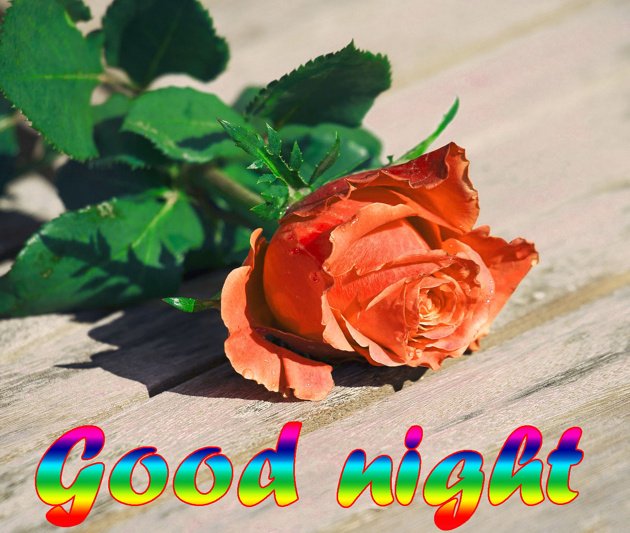RED ROSE GOOD NIGHT WISHES IMAGES WALLPAPER PICTURES FREE DOWNLOAD