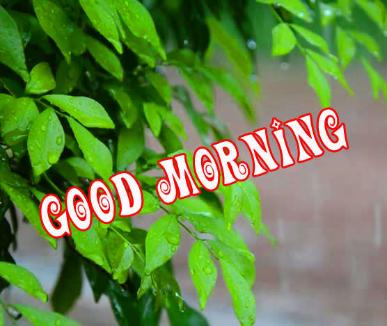 good morning wishes for a rainy day Images Wallpaper Pics Download