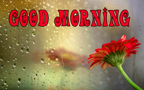 good morning wishes for a rainy day Images Wallpaper Photo for Whatsapp
