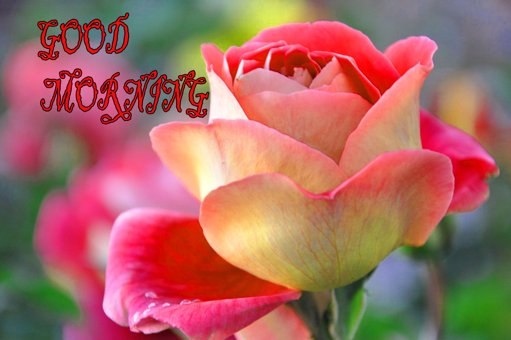 GOOD MORNING IMAGE WITH BEAUTIFUL FLOWERS NATURE WALLPAPER PIC FOR WIFE & HUSBAND