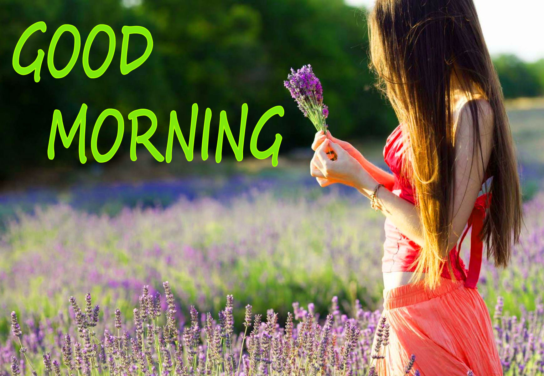 GOOD MORNING IMAGE WITH BEAUTIFUL FLOWERS NATURE WALLPAPER FOR BOYS