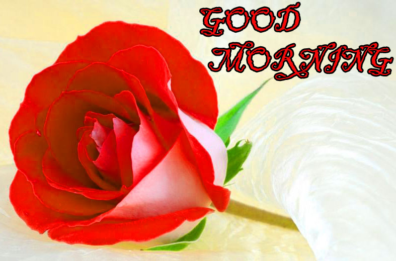 GOOD MORNING IMAGE WITH BEAUTIFUL FLOWERS NATURE WALLPAPER FREE DOWNLOAD & SHARE